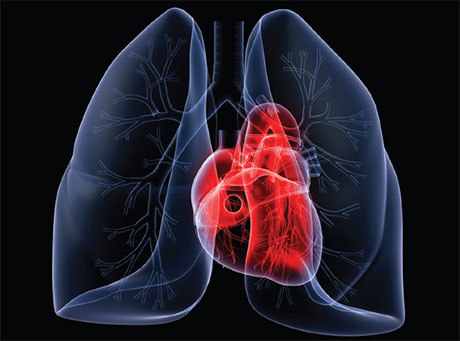 Image of lungs and heart